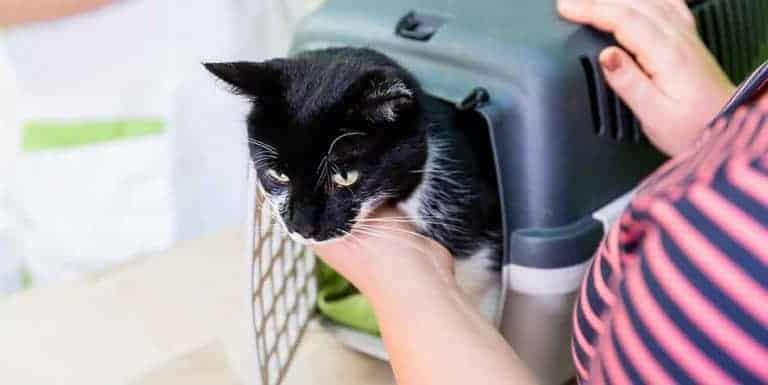 is it better to board a cat or leave at home