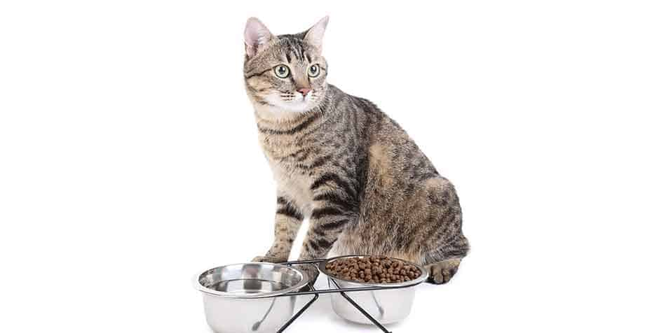 how long can a cat go without food or water