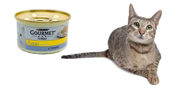 best canned food for savannah cats