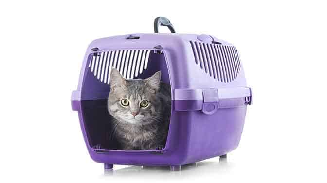 best cat carrier for difficult cats