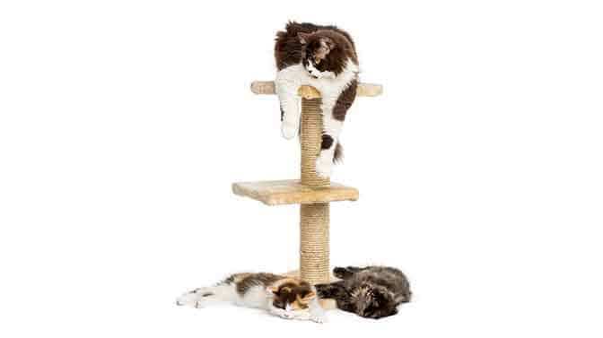 benefits of a cat tree
