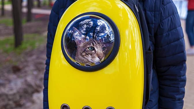 are cat backpacks good for cats