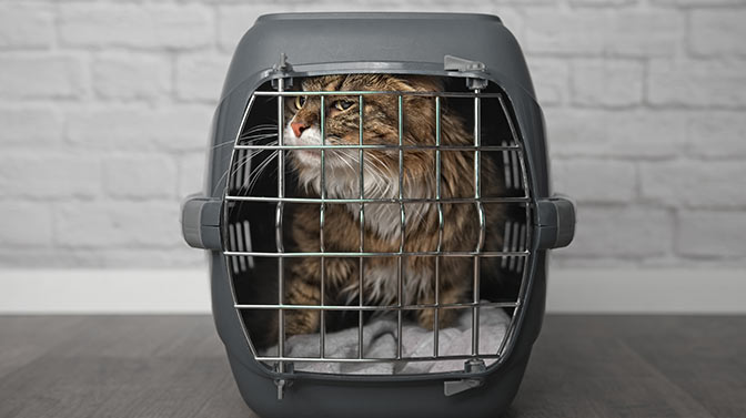 can I leave my cat in a carrier overnight