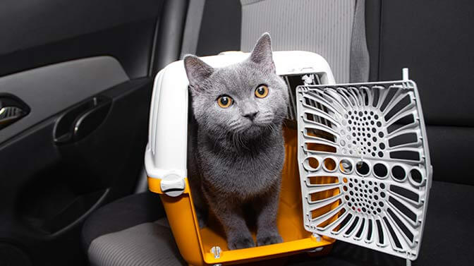 can I let my cat loose in the car