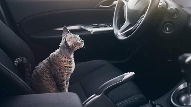 can you put a cat in a car without a carrier