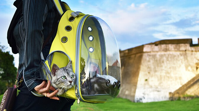 do cats like being in backpacks