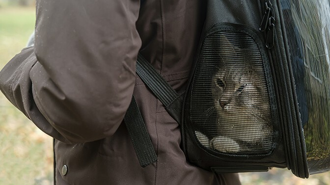 why do cats like backpacks