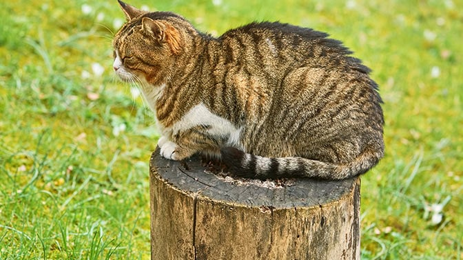 how to handle feral cats