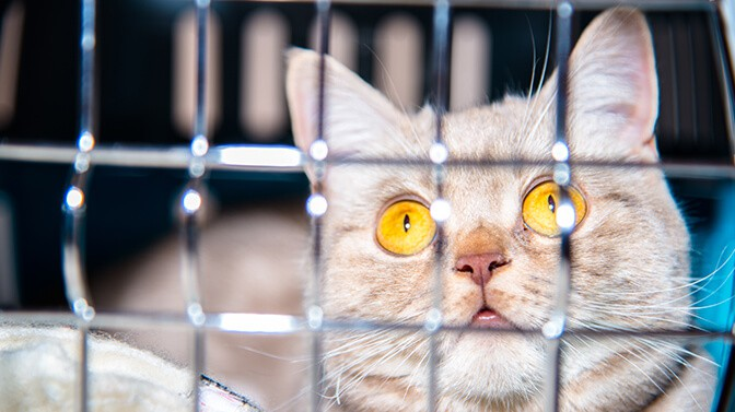 cat cage vs carrier