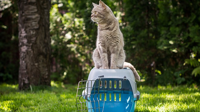 how to get an unwilling cat in a carrier