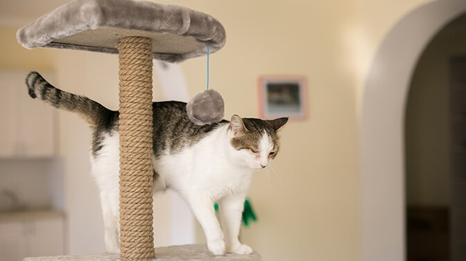 how to make a cat tree more stable