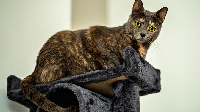 what is the best tree for large cats