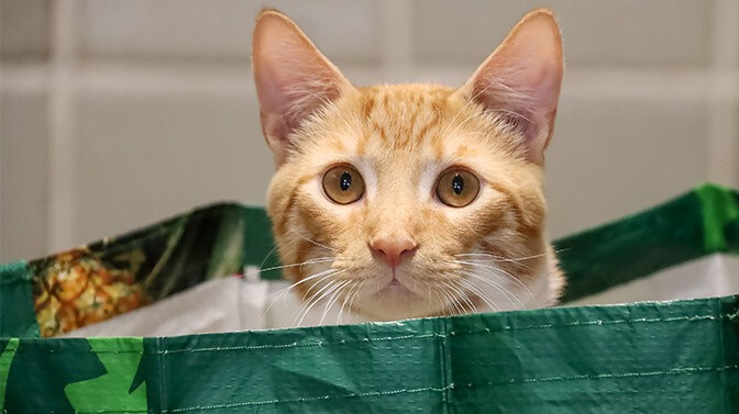 why do cats like carrier bags