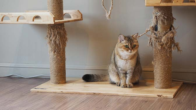 how tall should my cat tree be