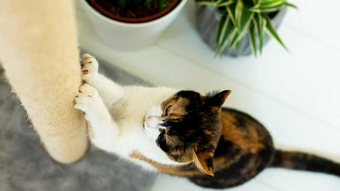 what scratching post is best for a kitten