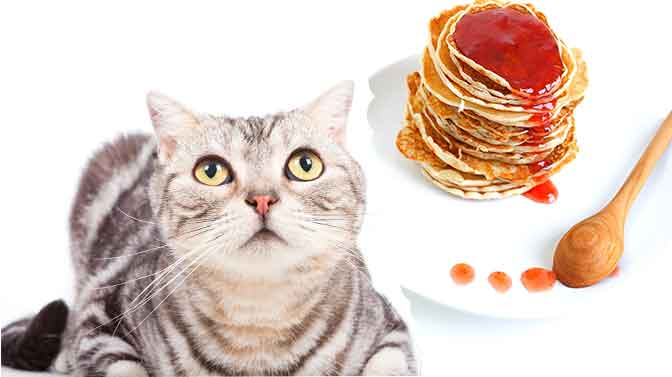 can cats eat pancakes with syrup