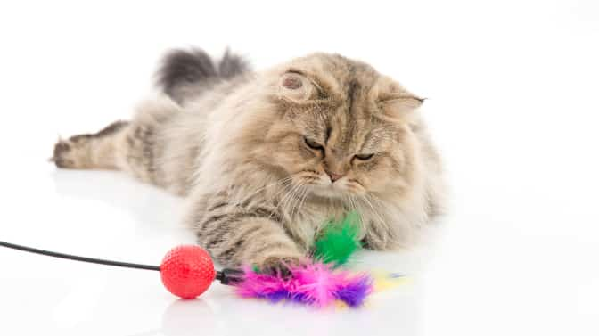 are Persian cats good family pets