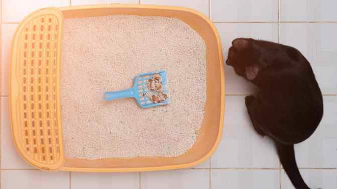 does wet cat food cause soft stool